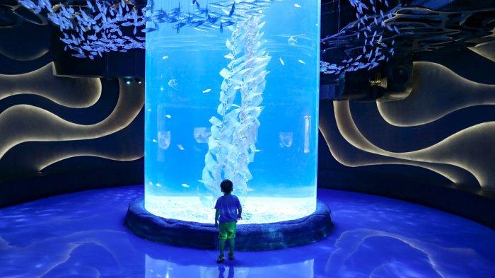 Harga Tiket Masuk Jakarta Aquarium Neo Soho, Akuarium Indoor Terbesar di Indonesia