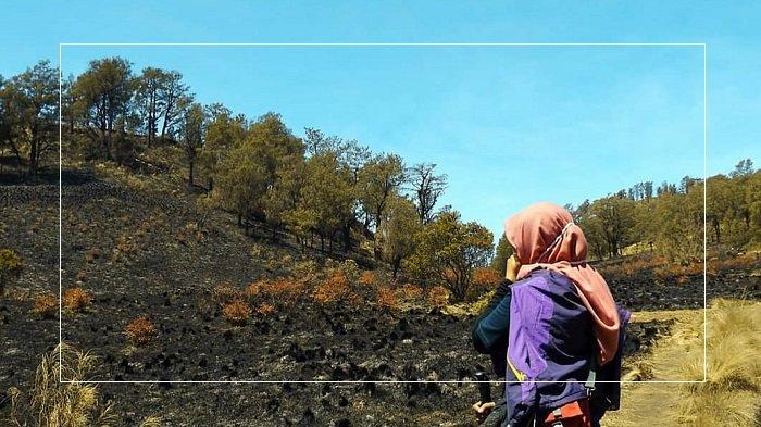 5 Potret Terkini Kawasan Gunung Lawu Pasca Kebakaran, Hanya Pemandangan Hitam yang Terlihat
