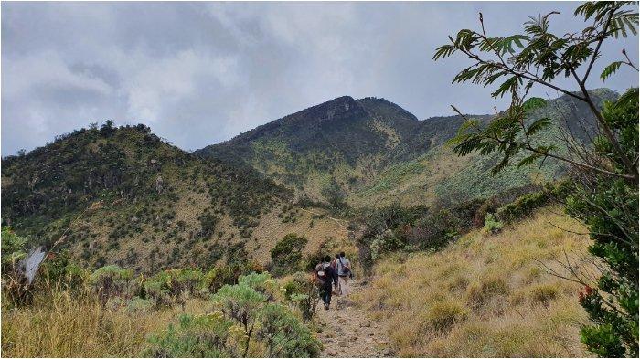 alur pendakian menuju puncak Gunung Lawu