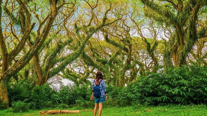 Hobi Berswafoto, Ini 10 Tempat Wisata Instagramable di Banyuwangi yang Wajib Dikunjungi