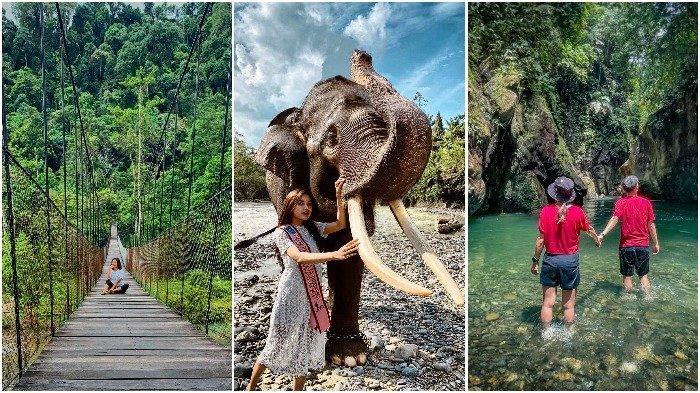 Harga Tiket Masuk Wisata Alam Tangkahan, Bisa Main Sambil Mandikan Gajah
