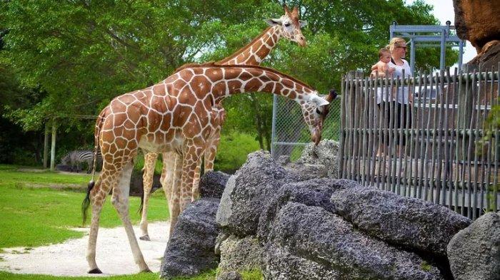 Kebun binatang.