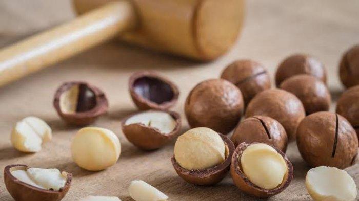 Ilustrasi kacang macadamia