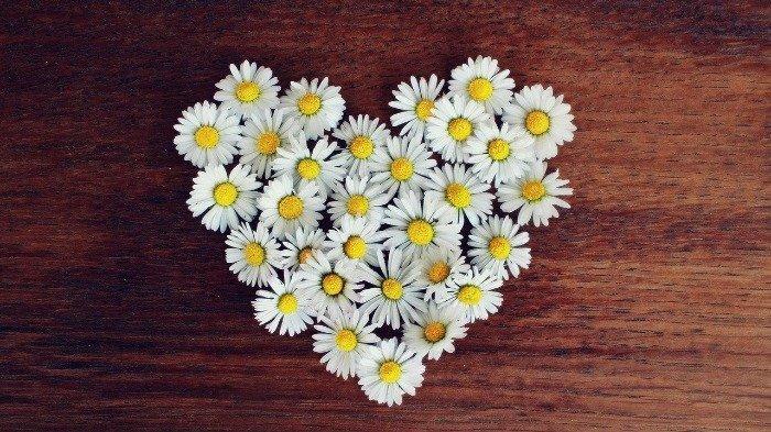 Jangan Pernah Berikan 7 Jenis Bunga Ini ke Pasanganmu di Hari Valentine, Termasuk Mawar Kuning