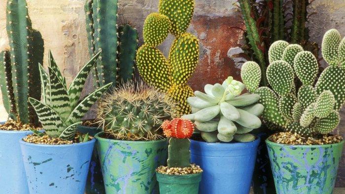 Kaktus hingga Tanah Liat, 6 Bahan Alami Ini Ternyata Bisa Dikonsumsi Manusia