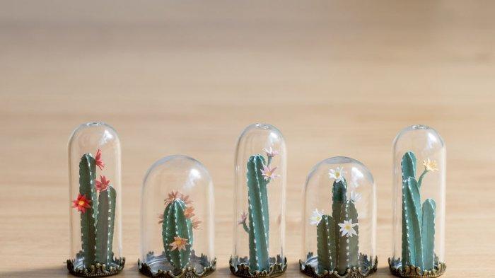 7 Manfaat Mengonsumsi Kaktus untuk Kesehatan yang Jarang Diketahui