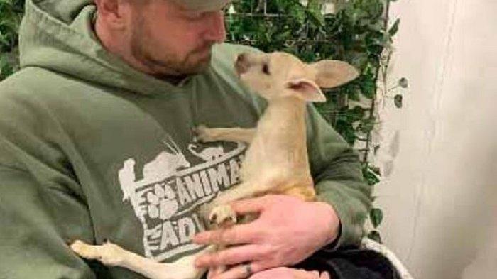 Kanguru Langka Lahir di Taman Satwa New York, Seluruh Tubuhnya Berwarna Putih