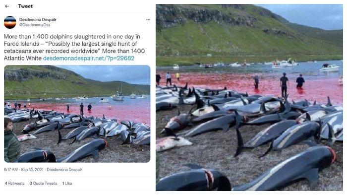 Kawanan lumba-lumba terbunuh di tepi pantai