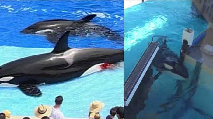Digigit Lumba-lumba Hingga Pembunuhan Brutal, Ini 7 Kengerian SeaWorld yang Jarang Diketahui