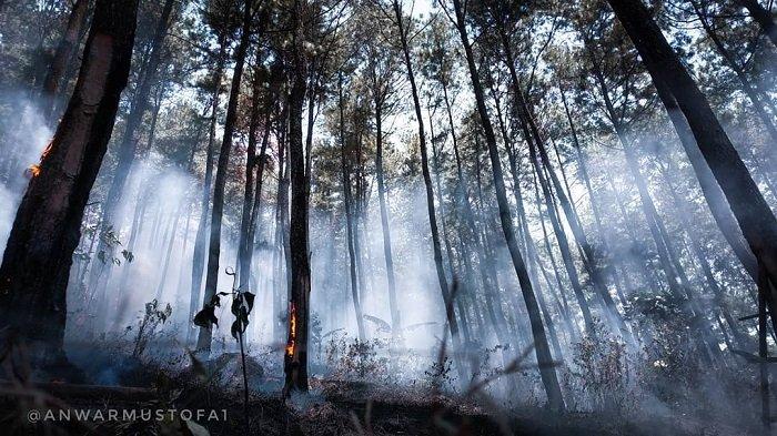 Berita Update - Kebakaran di Hutan Lindung Gunung Lawu Berhasil Dipadamkan