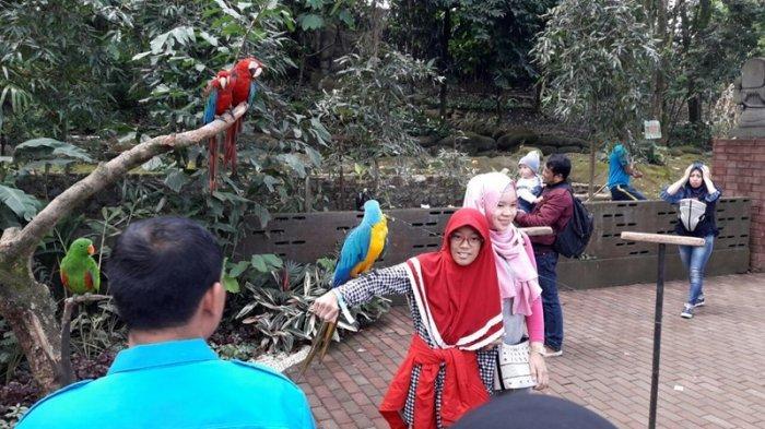 Dampak PPKM Darurat, Satwa di Kebun Binatang Bandung Terancam Kelaparan