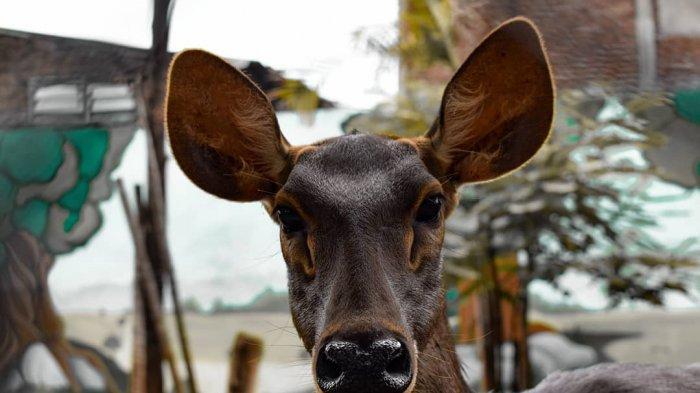 Ditutup Selama 4 Bulan, Kebun Binatang Surabaya (KBS) Dibuka Kembali untuk Kunjungan Wisata