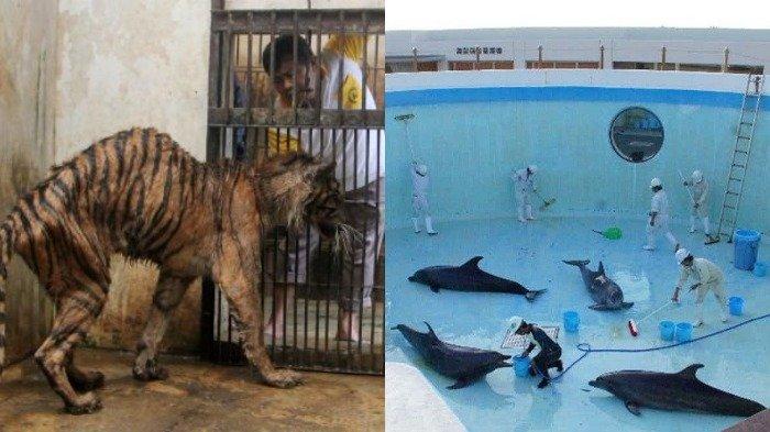 Potret Kebun Binatang di Indonesia yang Dijuluki 'Neraka' oleh Media Asing