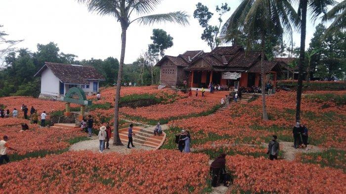Kebun Bunga Amarilis di Jalan Wonosari, Patuk, Gunungkidul.