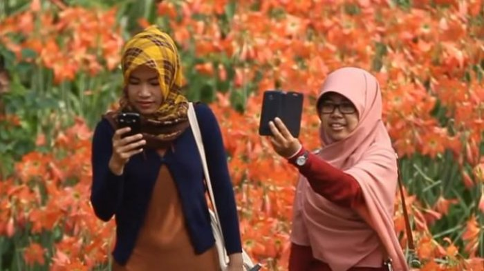 Kebun Bunga Amaryllis Kembali Mekar, Catat 5 Spotnya: Semoga Ga Rusak di Tangan Kids Jaman Now