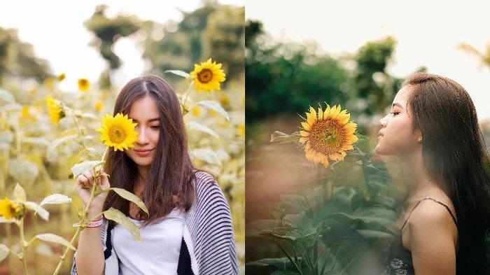 Ingin Jadikan Kebun Bunga Matahari Arumdalu Sebagai Latar Belakang Preweddingmu? Ini Cara Pesannya