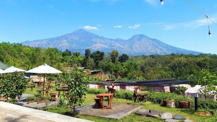 Kebun Pak Budi, tempat wisata di Pasuruan, Jawa Timur.