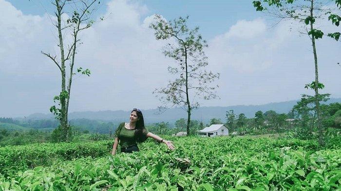 Wisata Gunung di Bogor, Ini 5 Kebun Teh Paling Instagramable yang Wajib Dikunjungi