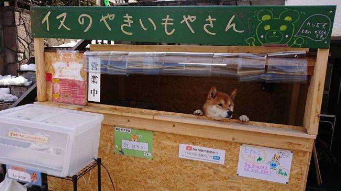 Dikelola Seekor Anjing, Kedai yang Jual Kentang Panggang di Jepang Ini Jadi Viral