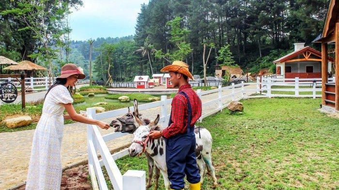 Jelajah Cimory Dairyland Puncak, Tempat Wisata Populer di Bogor untuk Liburan Akhir Pekan