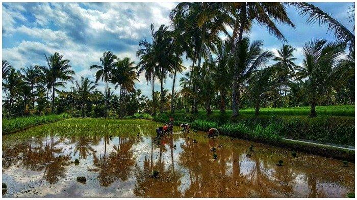 Desa Wisata Kembang Kuning