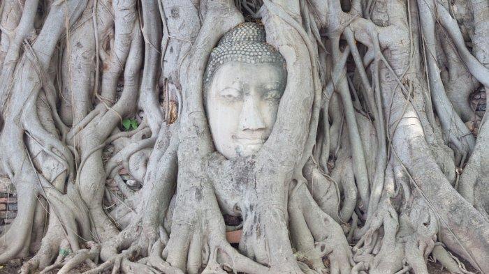 Asal-usul Kepala Buddha yang Muncul dari Akar Pohon di Thailand