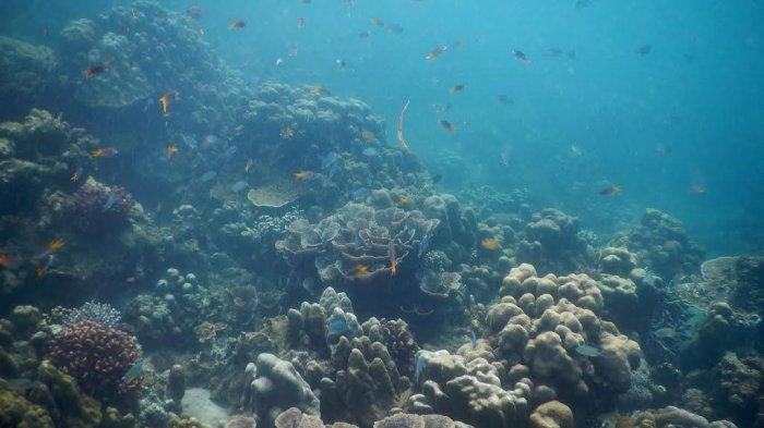 Kepulauan Mursala