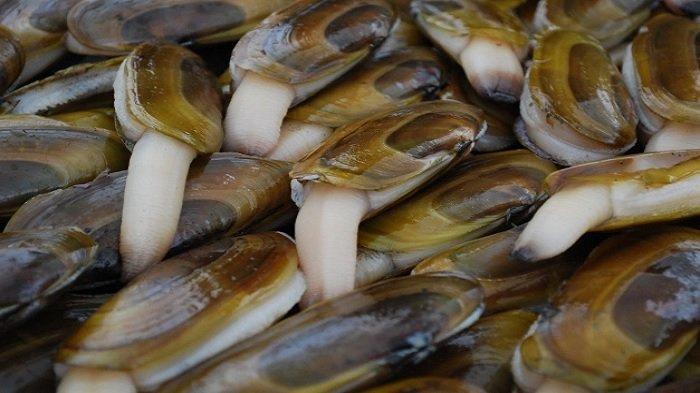 Mencicipi Kerang Lorjuk, Seafood Langka yang jadi Andalan Kuliner Pesisir Madura