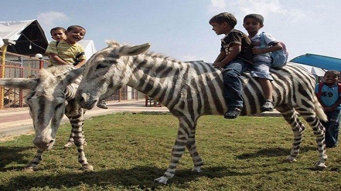 5 Potret Kekejaman pada Hewan di Kebun Binatang: Ada yang Tubuhnya Dicat Hingga Hidup dengan Sampah