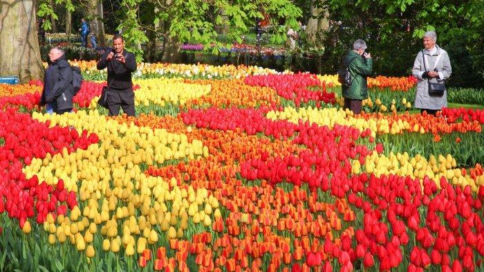 Musim Semi Tiba Keukenhof Taman Bunga Tulip Di Belanda Paling Tenar Akhirnya Kembali Dibuka Tribun Travel