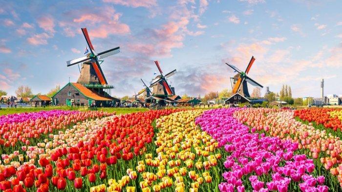 Liburan Musim Semi di Belanda, Wajib Mampir Taman Bunga Keukenhof yang  Namanya Mendunia - Tribun Travel