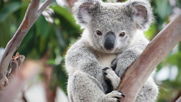 koala_20171101_192215.jpg