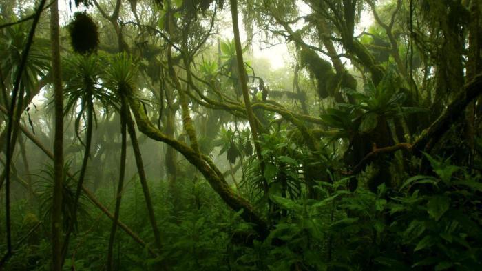 Kongo Forest