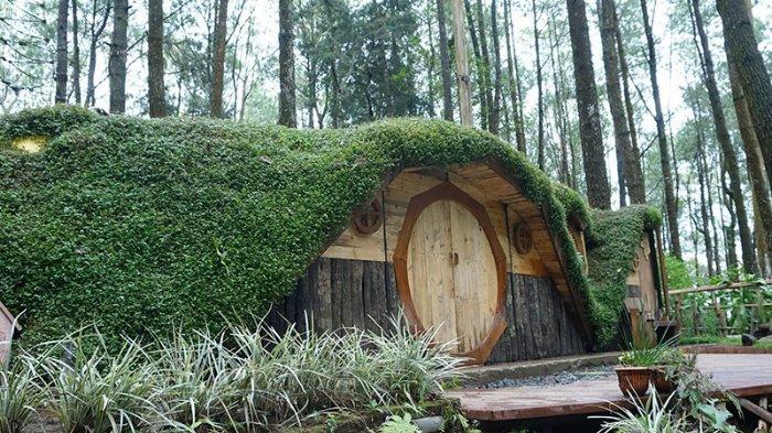 Harga Tiket Masuk Kopeng Treetop Semarang, Wisata Outbound Instagramable di Tengah Pepohonan Pinus
