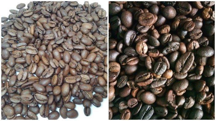 Ilustrasi kolase potret perbedaan biji kopi arabika dengan biji kopi robusta
