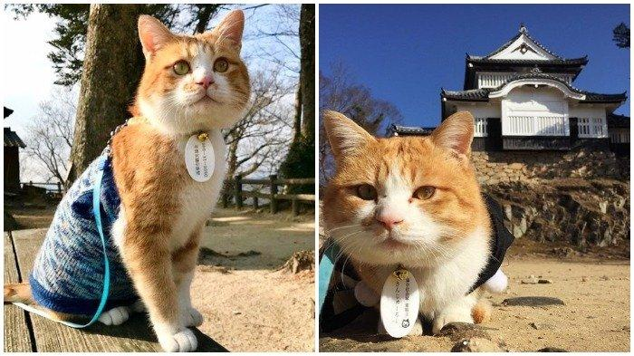 Sanjiro, Kucing Gemas yang Bikin Kastil Jepang Makin Ramai Turis