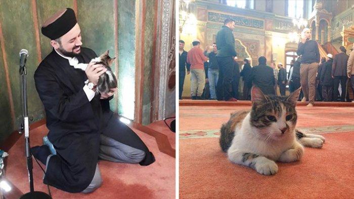 Potret Kucing Liar Penghuni Masjid di Turki yang Dekat dengan Jemaah Hingga Boleh Masuk ke Mimbar