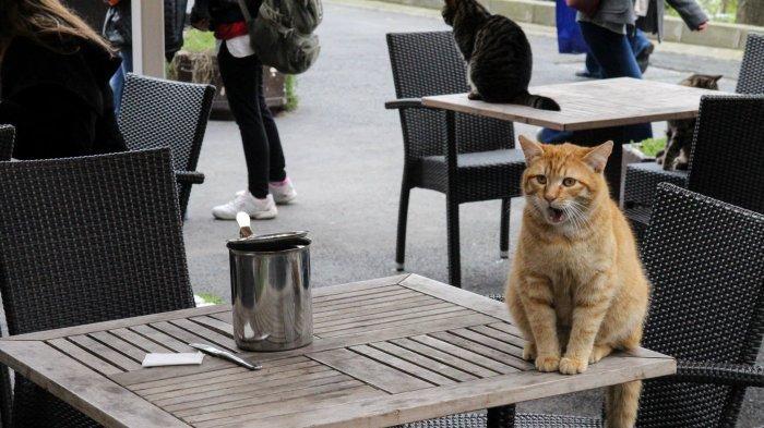 Asal-usul Ribuan Kucing yang Menjadi 'Penduduk' Kota Istanbul di Turki