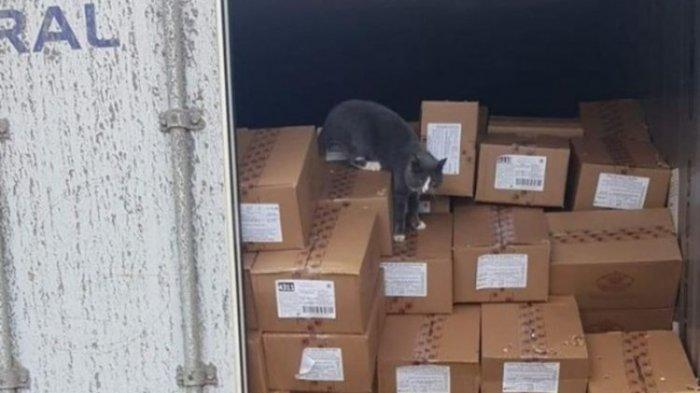 Viral Cerita Kucing Terkunci di Dalam Kontainer, Bertahan Hidup 3 Minggu Tanpa Makan dan Minum