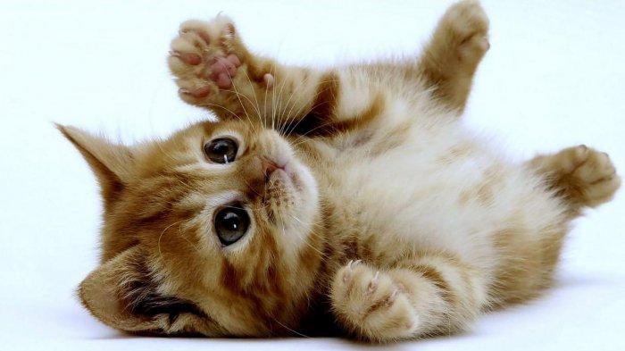 Gambar Kucing Paling Lucu Di Dunia Kata Kata