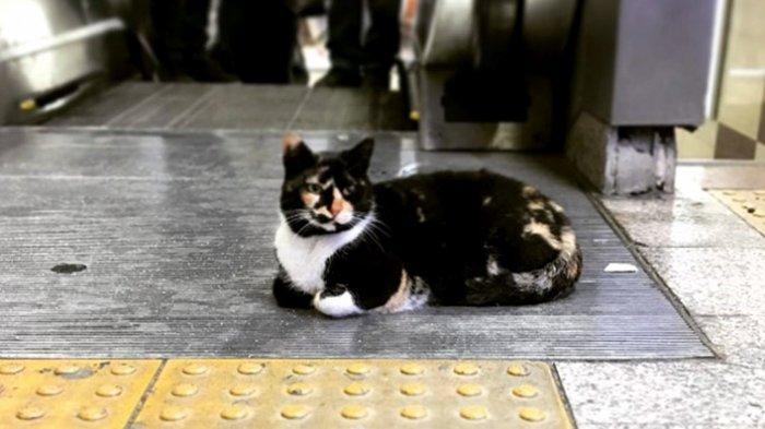 Seekor Kucing Jadi Penunggu di Stasiun Metro Istanbul, Lihat Reaksi Orang Saat Lewat di Dekatnya