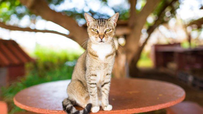 Selain Mesir, 6 Tempat Peradaban Kuno di Dunia Ini Juga Memuja Kucing