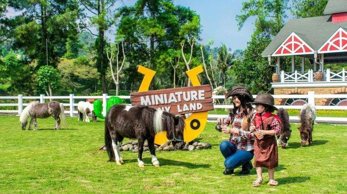 Kuda poni Cimory Dairyland Puncak