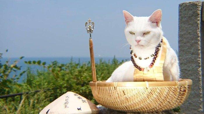 Melihat Foto-foto Nyan Nyan Ji, Kuil Khusus Kucing di Jepang yang Unik