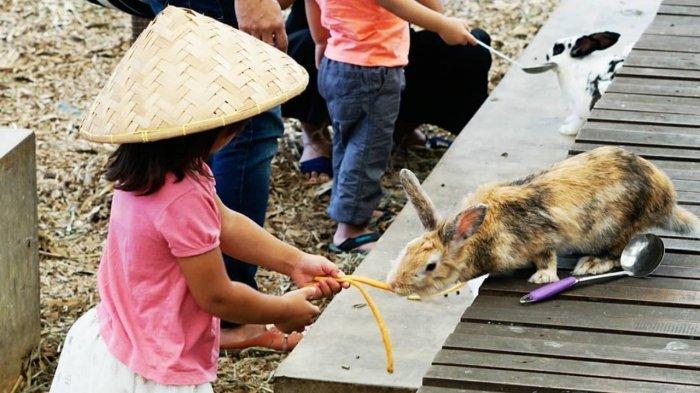 Harga Tiket Masuk Kuntum Farmfield Terbaru 2021, Tempat Wisata Keluarga di Bogor