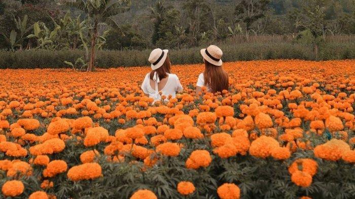 6 Kebun Bunga Instagramable di Bali, Ada Padang Bunga Kasna yang Bagai Dihujani Salju