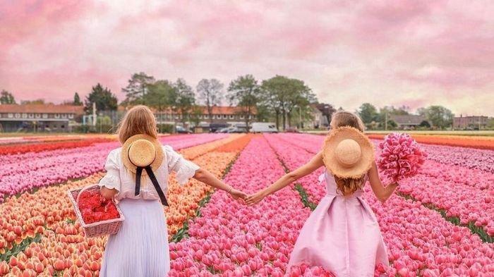 Ladang Bunga Tulip di Belanda