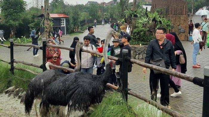 Suasana wisata di Lembang Park & Zoo