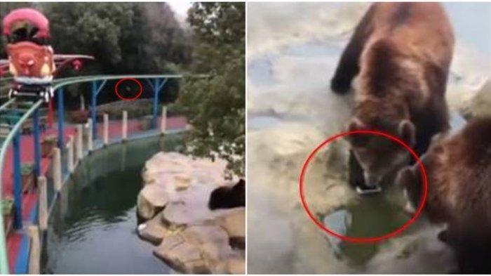 Salah Lempar, Ingin Memberikan Apel ke Kandang Beruang, Pengunjung Ini Malah Lemparkan iPhonenya