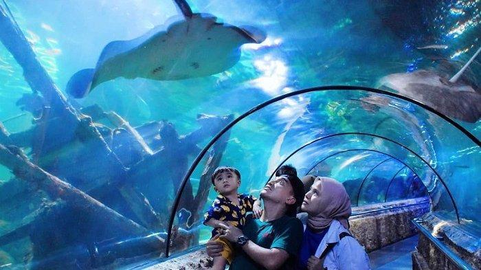 Seaworld Ancol tawarkan hiburan sekaligus pendidikan